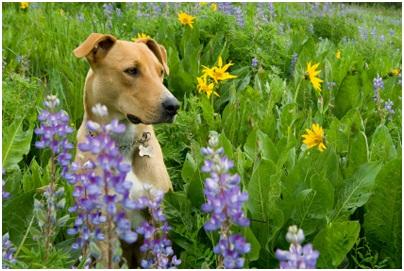 10 Hierbas Medicinales Para Perros Y Humanos Perrospedia