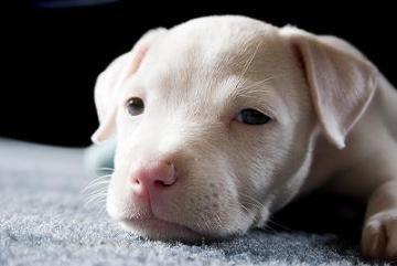 cachorro-triste