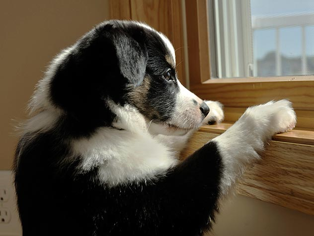 perro-ansioso