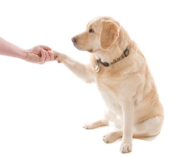 perro dando la pata