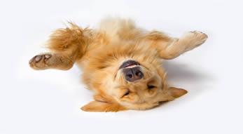perro jugando muerto