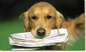 perro-periodico