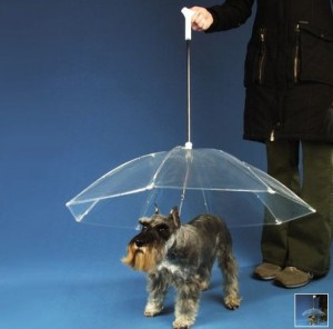perro-sombrilla
