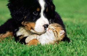 perro y gatico