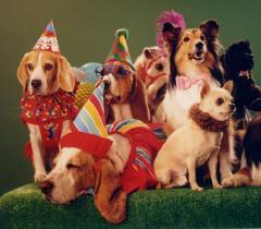 socializacion cachorros
