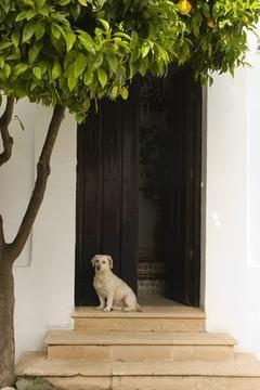 puerta perro