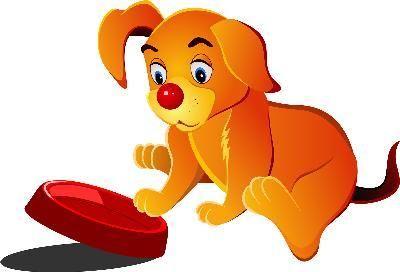 cachorro moviendo tazon