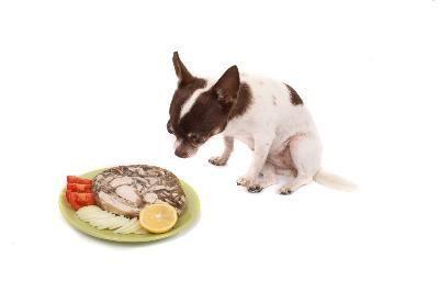 dieta chihuahua