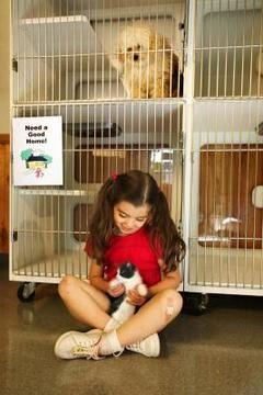 refugio perritos