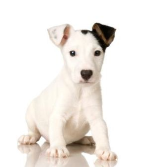 lindo perrito