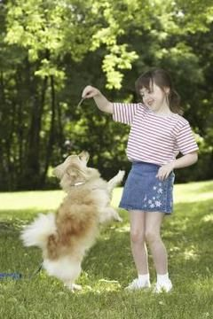 nina jugando con perro