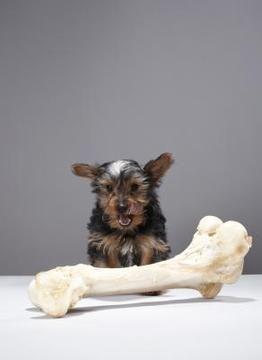 cachorro y hueso