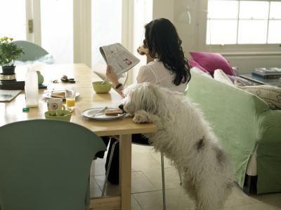 perro robando comida