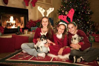 navidad con mascotas