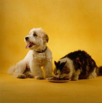 perro y gato comiendo