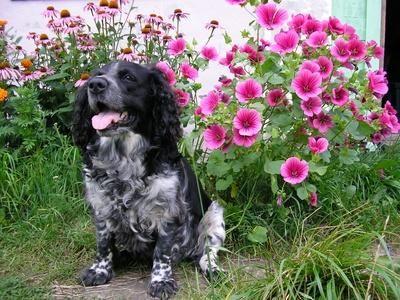 perro gordo en jardin