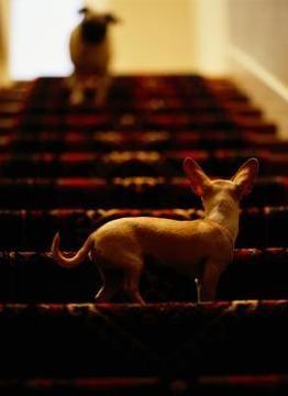 perro en escalera