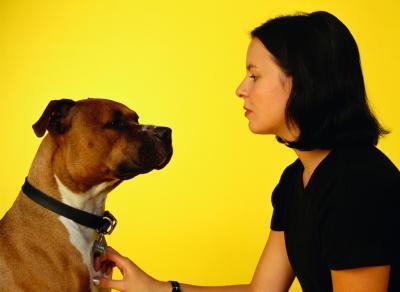 perro y duena