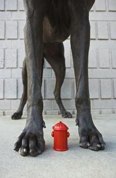 Cómo Hacer Una Caja De Arena Para Un Perro Mayor Perrospedia