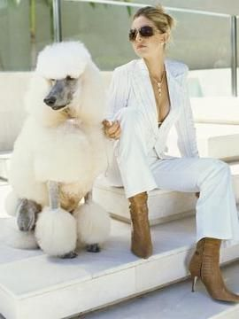 Corte de pelo a poodle
