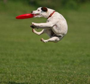 hiper-perro