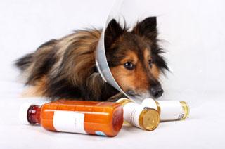 medicacion perro