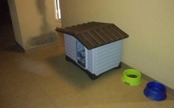 Casas Para Perros De Segunda Mano Las 3 Mejores De Amazon Perrospedia