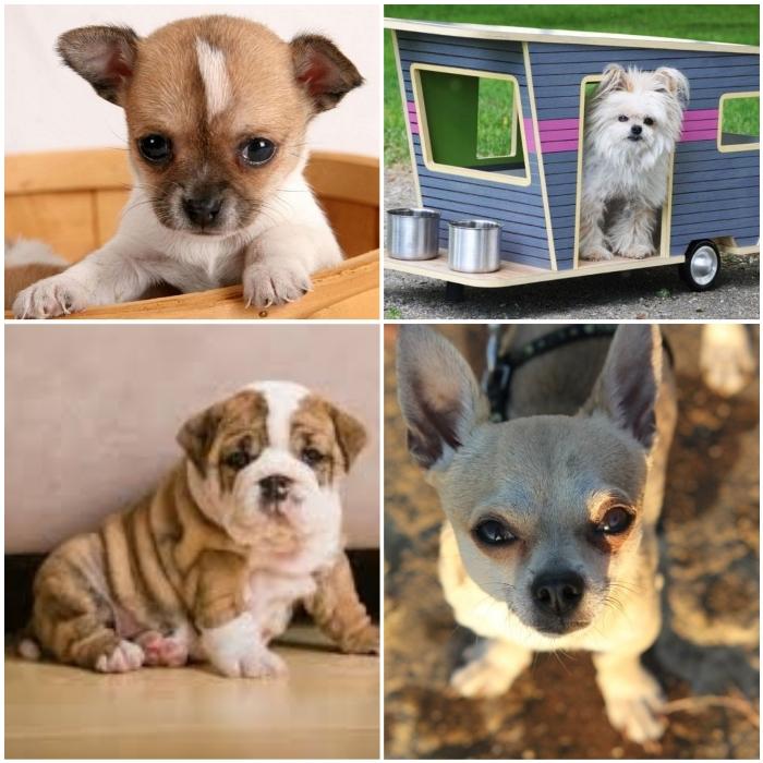 Las 5 mejores casas para perros peque os en amazon 2019 perrospedia - Casas para perros pequenos ...